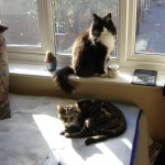 This is Missy, the one on the bed, with our neighbrours cat - best mates!